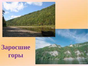 Заросшие горы