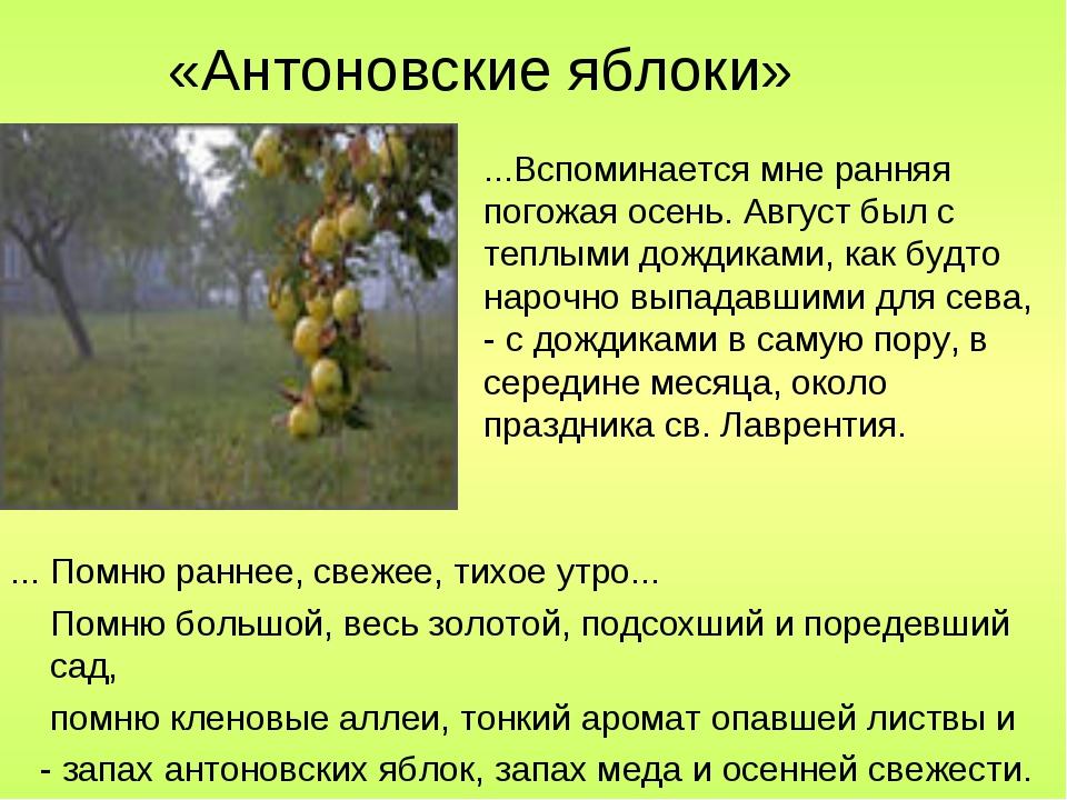 «Антоновские яблоки» ... Помню раннее, свежее, тихое утро... Помню большой, в...