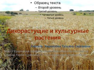 Дикорастущие и культурные растения Учитель  Кирокосян Татьяна Сергеевна МБО