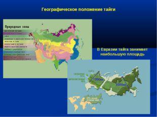 Географическое положение тайги В Евразии тайга занимает наибольшую площадь