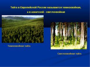 Тайга в Европейской России называется темнохвойная, а в азиатской - светлохво