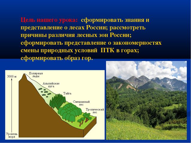 Цель нашего урока: сформировать знания и представление о лесах России; рассмо...