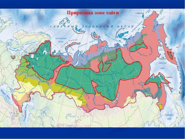 Природная зона тайги