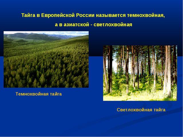 Тайга в Европейской России называется темнохвойная, а в азиатской - светлохво...