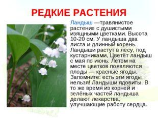 РЕДКИЕ РАСТЕНИЯ Ландыш —травянистое растение с душистыми изящными цветками. В