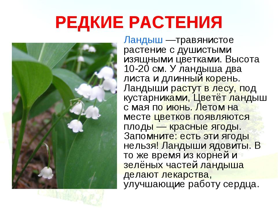 РЕДКИЕ РАСТЕНИЯ Ландыш —травянистое растение с душистыми изящными цветками. В...