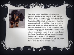 Diet your puppy should include vegetable proteins, should be not very fat to