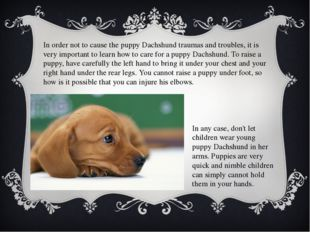 In order not to cause the puppy Dachshund traumas and troubles, it is very im