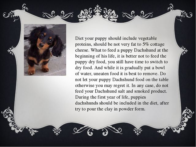 Diet your puppy should include vegetable proteins, should be not very fat to...