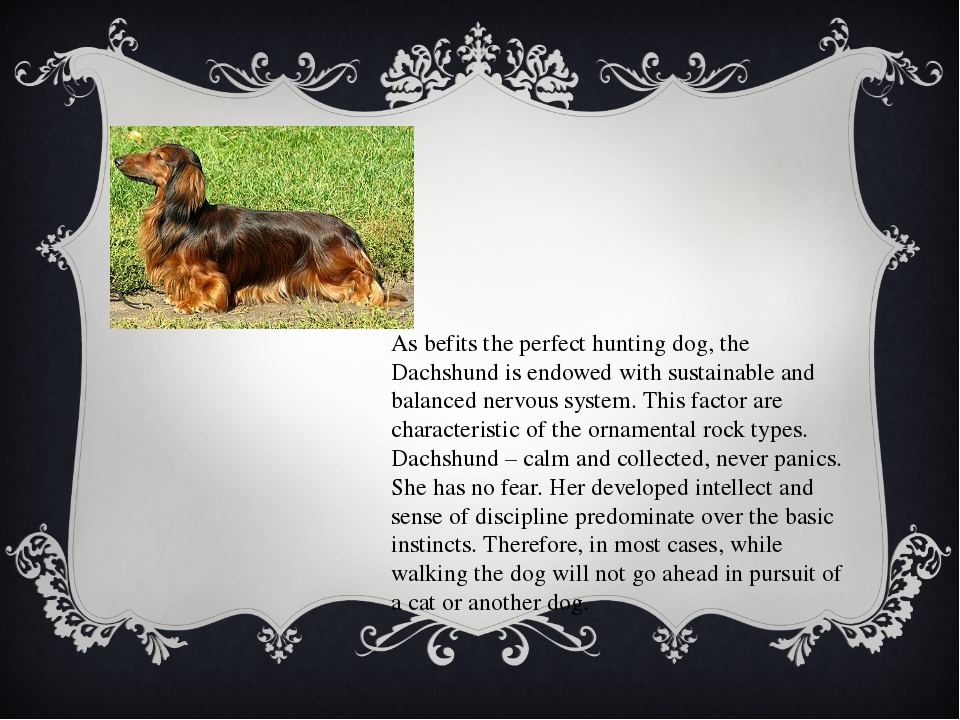 As befits the perfect hunting dog, the Dachshund is endowed with sustainable...