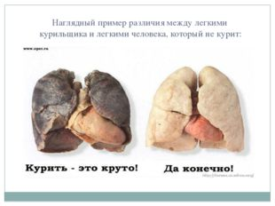 Наглядный пример различия между легкими курильщика и легкими человека, которы