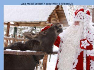 Дед Мороз любит и заботится о животных