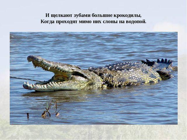 И щелкают зубами большие крокодилы, Когда проходят мимо них слоны на водопой.