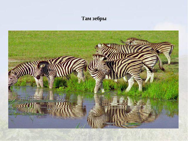 Там зебры
