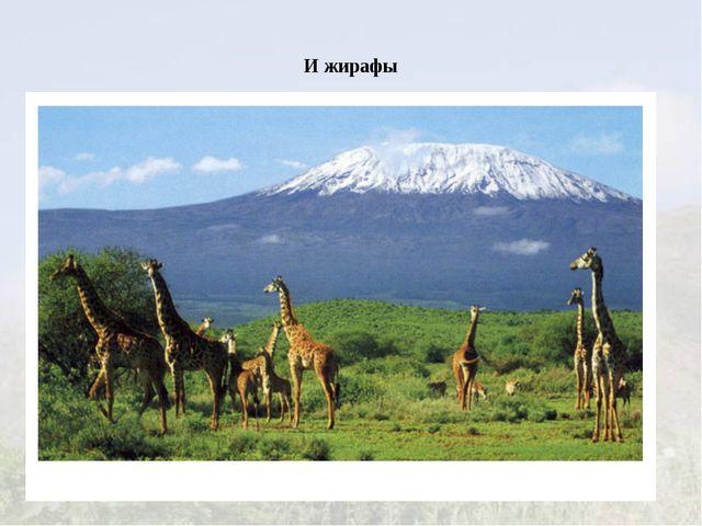 И жирафы