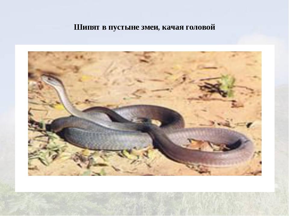 Шипят в пустыне змеи, качая головой