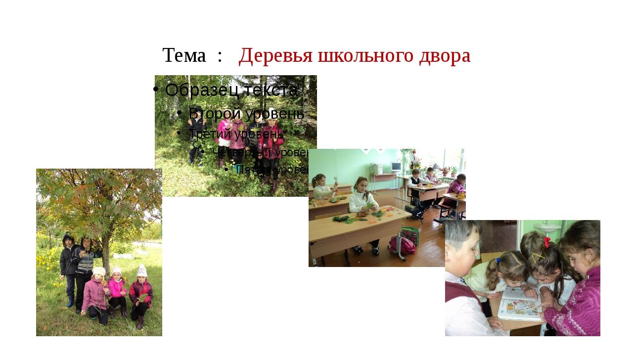 Тема : Деревья школьного двора