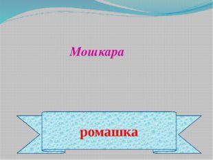 ромашка Мошкара