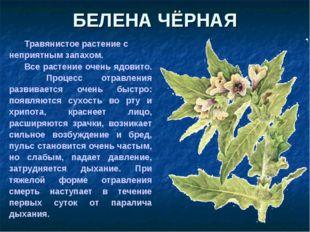 Травянистое растение с неприятным запахом. Все растение очень ядовито. Проц