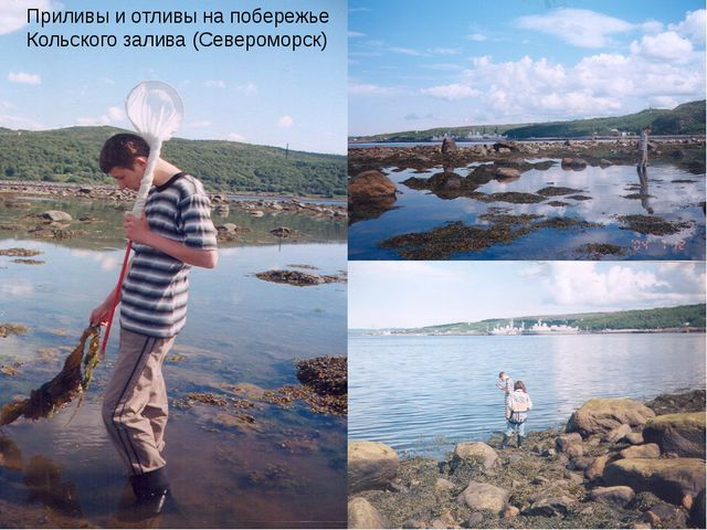 Приливы и отливы на побережье Кольского залива (Североморск)