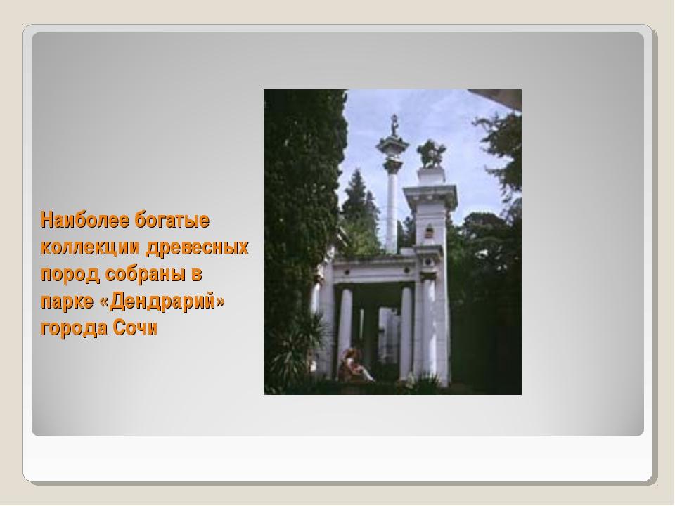 Наиболее богатые коллекции древесных пород собраны в парке «Дендрарий» город...