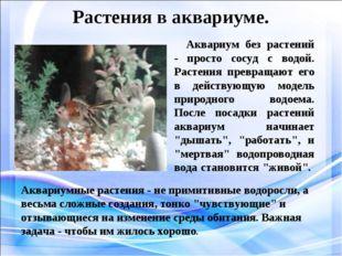 Растения в аквариуме. Аквариум без растений - просто сосуд с водой. Растения