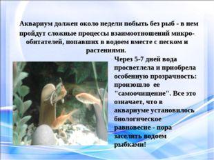 Аквариум должен около недели побыть без рыб - в нем пройдут сложные процессы