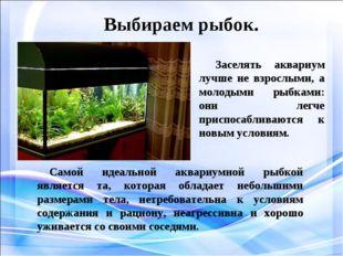 Выбираем рыбок. Заселять аквариум лучше не взрослыми, а молодыми рыбками: он