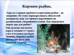 Кормим рыбок. Одна из главных проблем в кормлении рыбок – их ожирение. Не сто