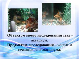 Объектом моего исследования стал – аквариум. Предметом исследования – живые