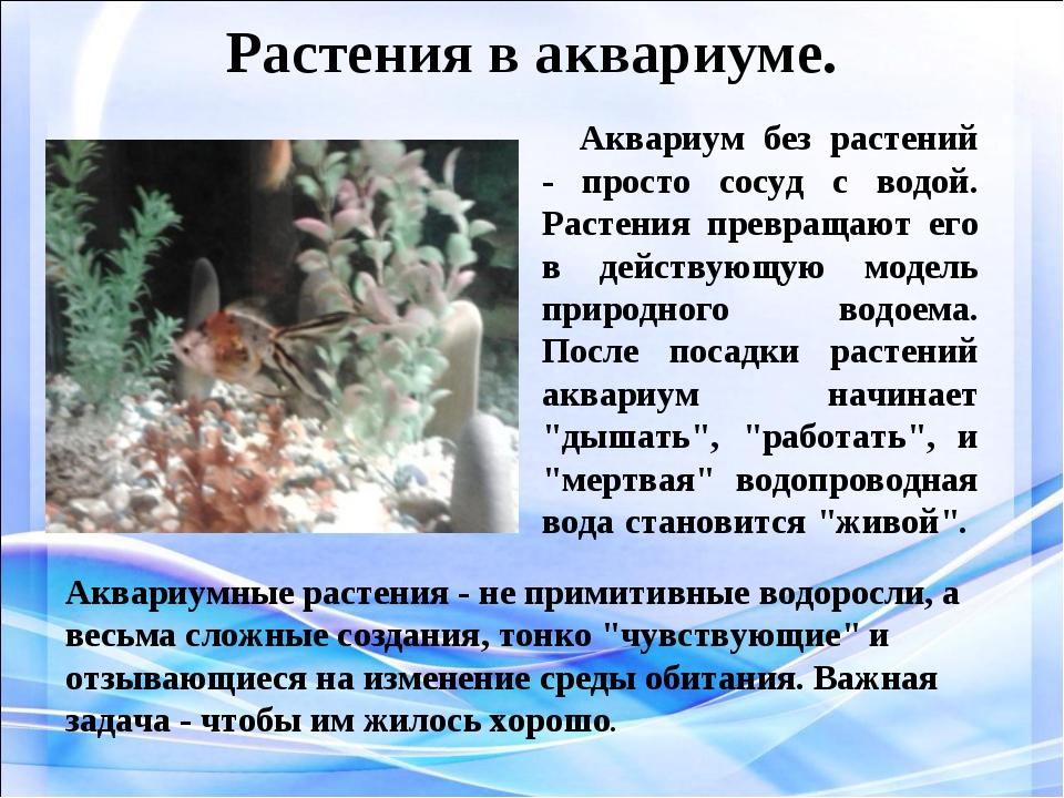Растения в аквариуме. Аквариум без растений - просто сосуд с водой. Растения...