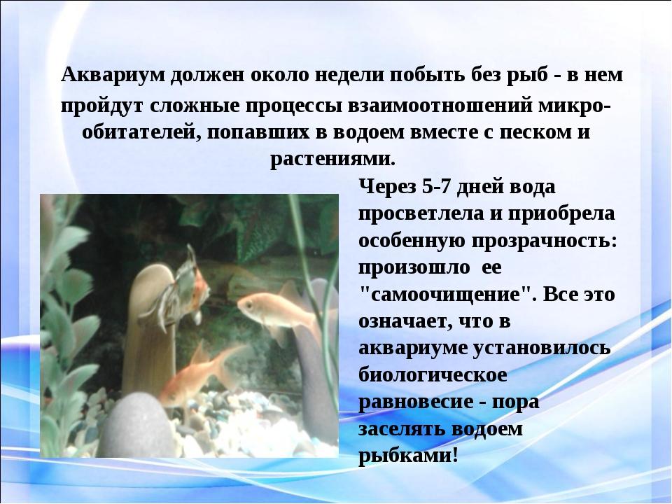 Аквариум должен около недели побыть без рыб - в нем пройдут сложные процессы...