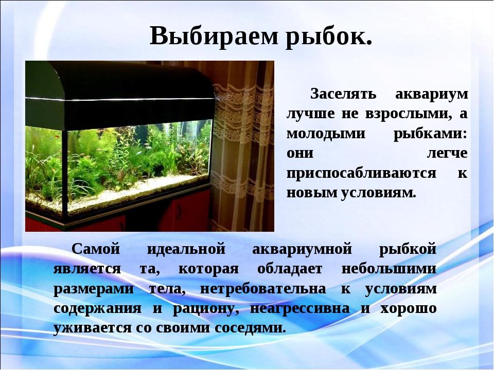 Выбираем рыбок. Заселять аквариум лучше не взрослыми, а молодыми рыбками: он...