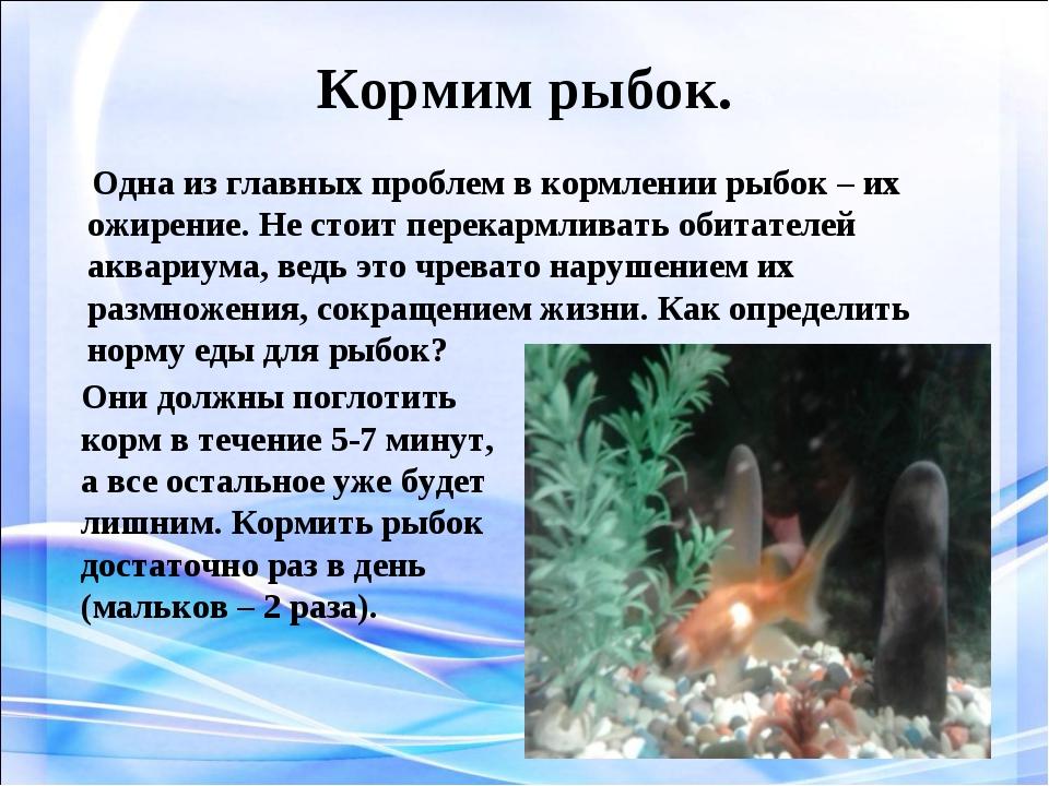 Кормим рыбок. Одна из главных проблем в кормлении рыбок – их ожирение. Не сто...