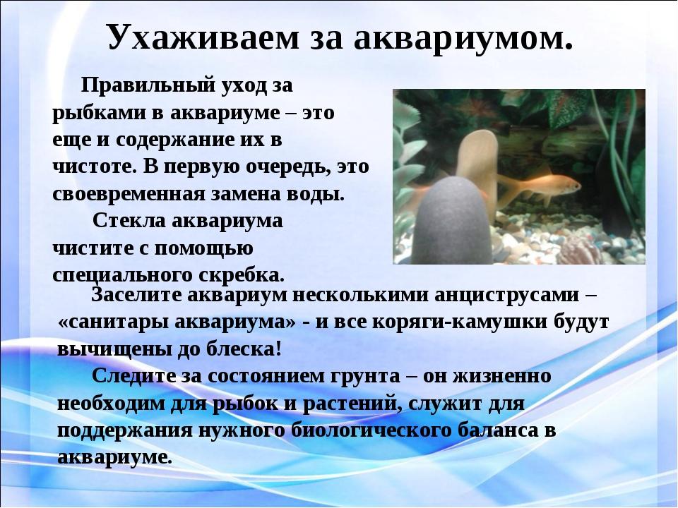Ухаживаем за аквариумом. Правильный уход за рыбками в аквариуме – это еще и с...