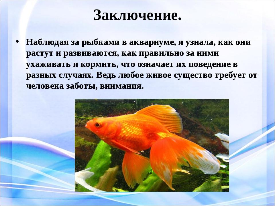 Заключение. Наблюдая за рыбками в аквариуме, я узнала, как они растут и разви...