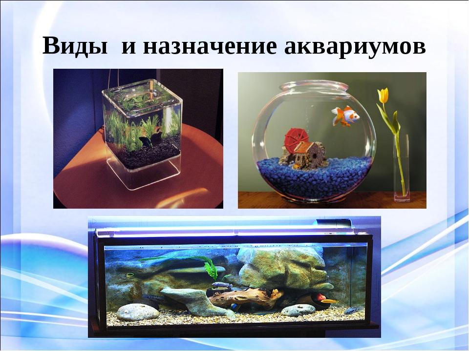 Виды и назначение аквариумов