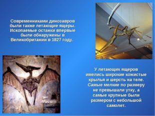 Современниками динозавров были также летающие ящеры. Ископаемые останки впер