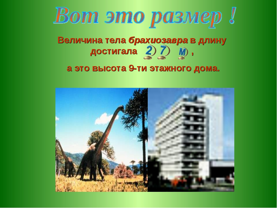 Величина тела брахиозавра в длину достигала , а это высота 9-ти этажного дома.