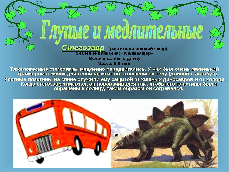 Стегозавр (растительноядный ящер) Значение названия: «Крышеящер» Величина: 9...