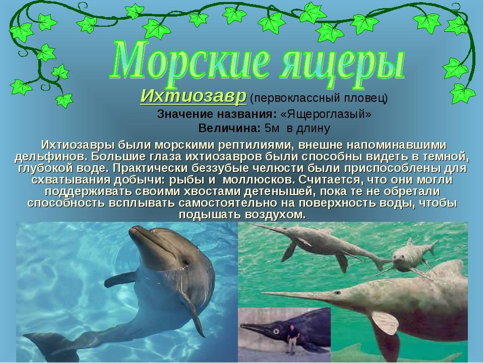 Ихтиозавр (первоклассный пловец) Значение названия: «Ящероглазый» Величина: 5...