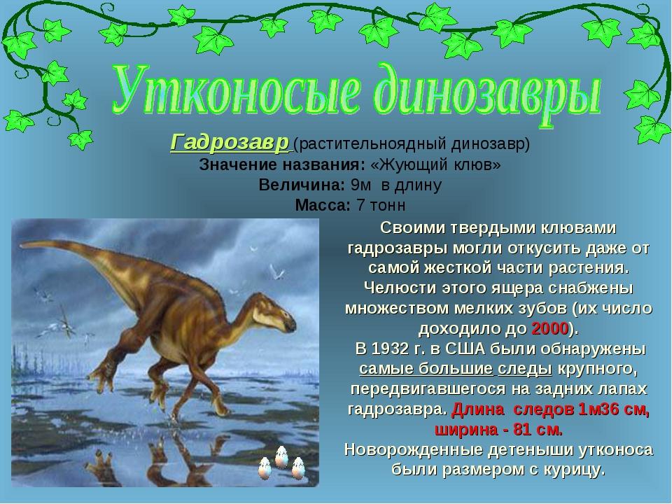 Своими твердыми клювами гадрозавры могли откусить даже от самой жесткой части...