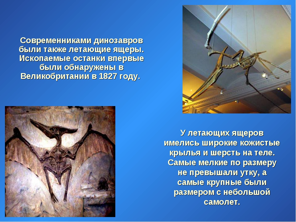Современниками динозавров были также летающие ящеры. Ископаемые останки впер...