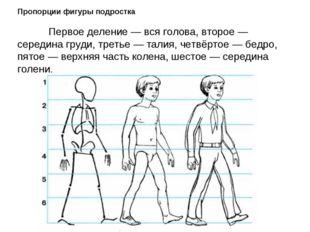 Пропорции фигуры подростка  Первое деление — вся голова, второе — середина