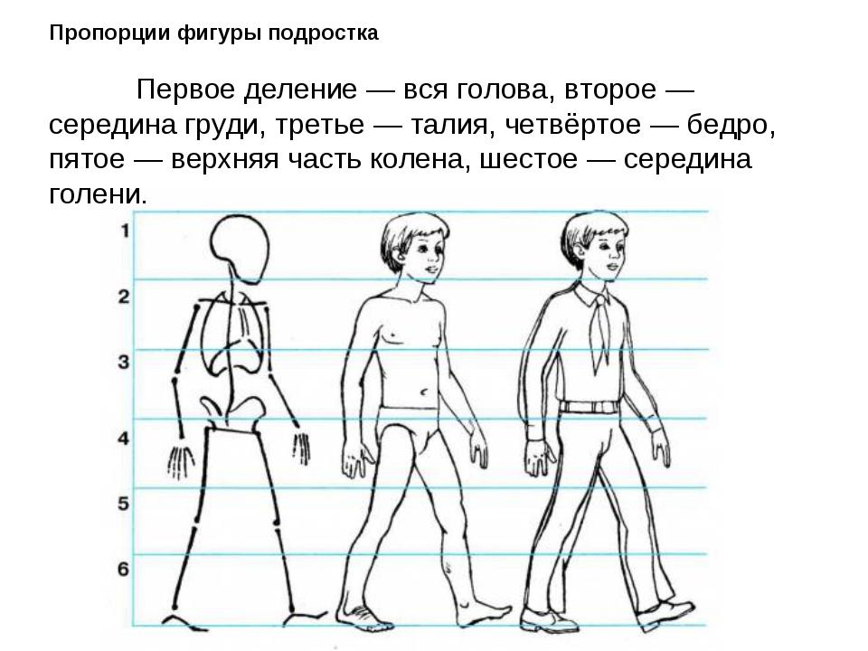 Пропорции фигуры подростка  Первое деление — вся голова, второе — середина...