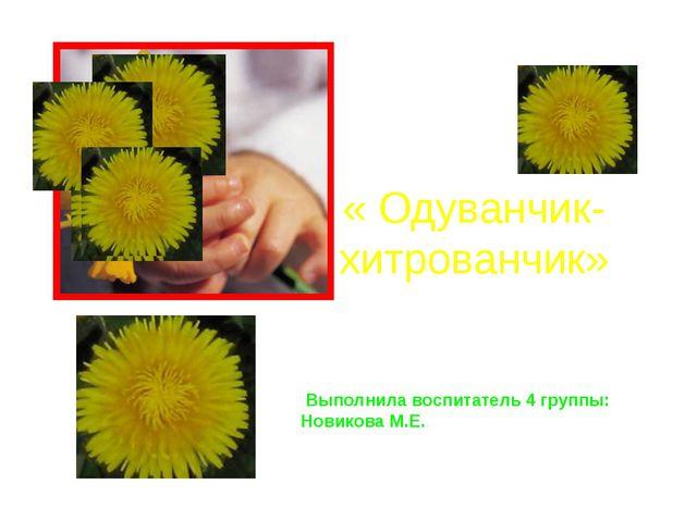 « Одуванчик-хитрованчик» Выполнила воспитатель 4 группы: Новикова М.Е. Включи...