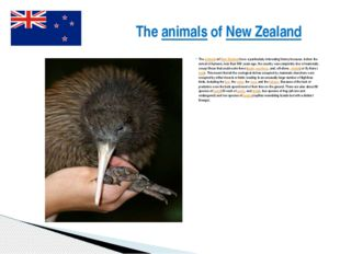 The animals of New Zealand have a particularly interesting history because, b