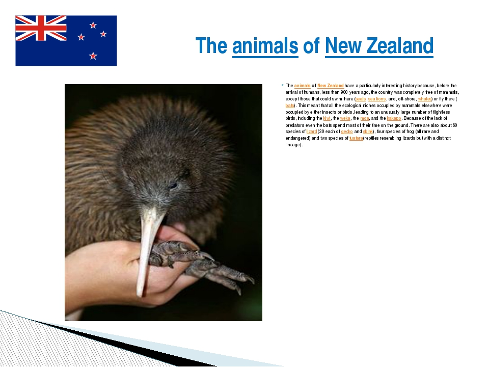 The animals of New Zealand have a particularly interesting history because, b...