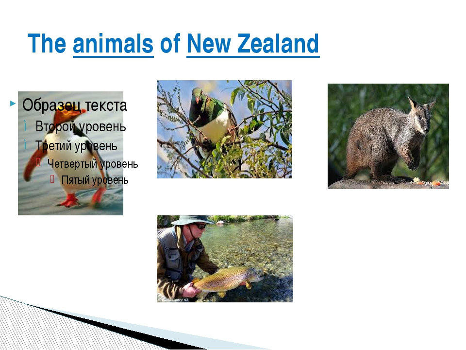 The animals of New Zealand
