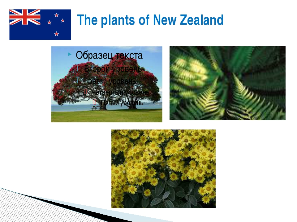 The plants of New Zealand The plants of New Zealand